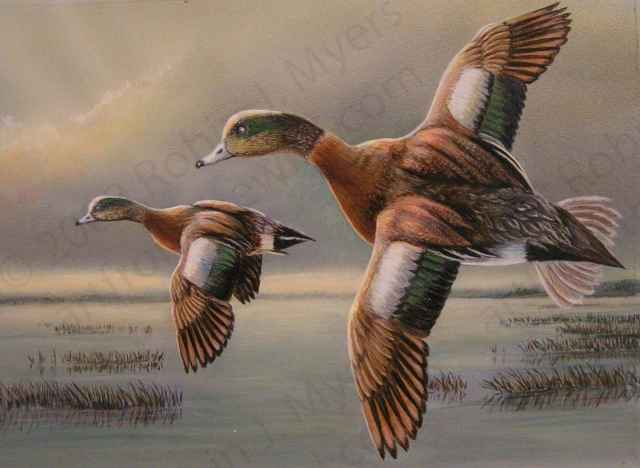 """Wigeons on Wing"""